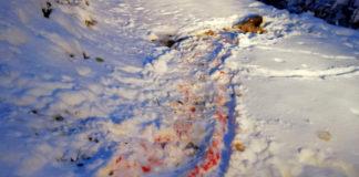 Imagen del corzo cazado por el cánido (Foto: Servicio especial)